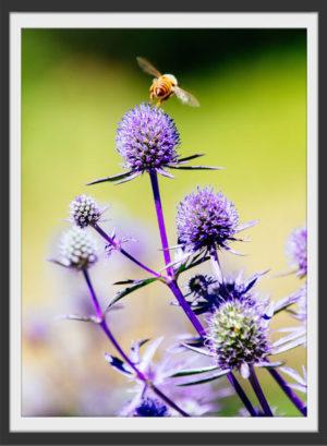 Plakat Bee on flower
