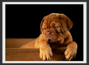 Plakat Cute puppy