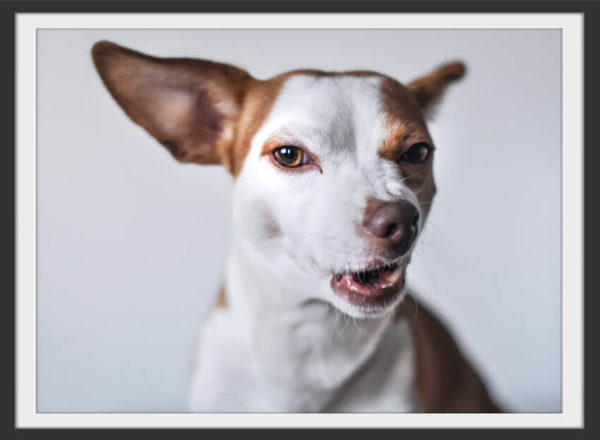 Plakat Funny dog