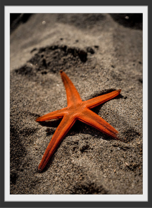 Plakat Orange starfish