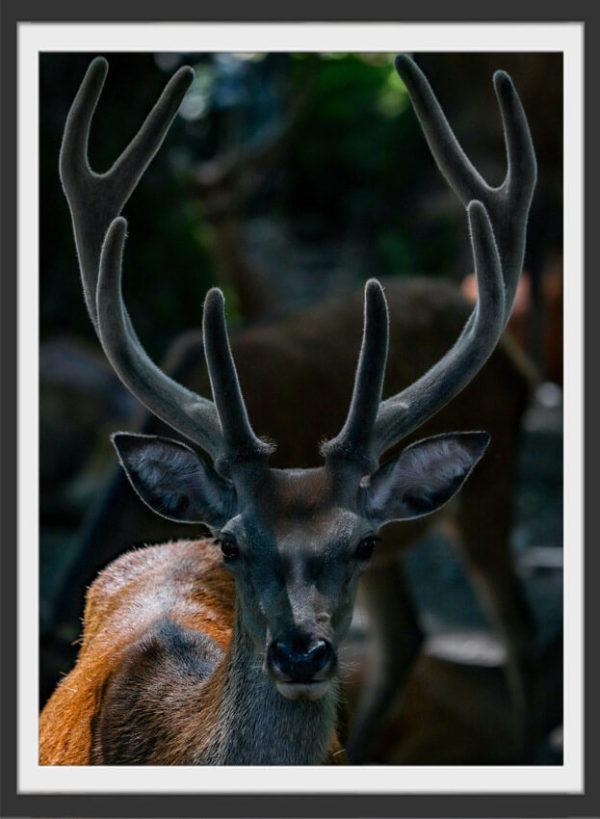 Plakat Reindeer