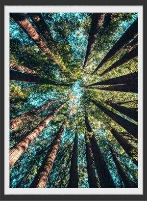 Plakat Trees