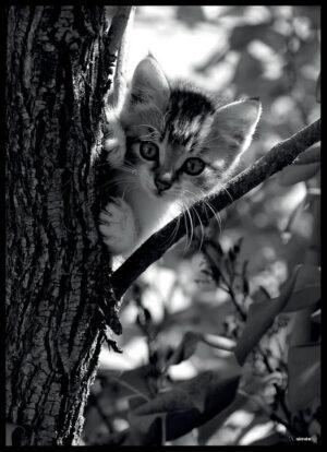 Killingen i træet fotoplakat