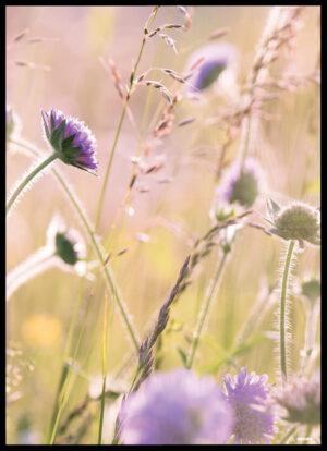 De vilde blomster plakat