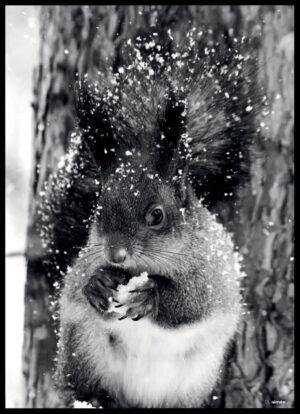 Egernet i sneen fotoplakat