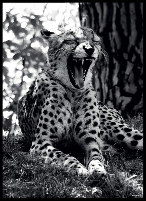 Geparden fotoplakat