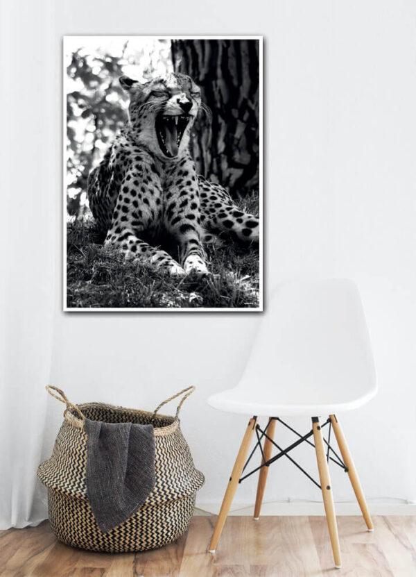 Geparden plakat