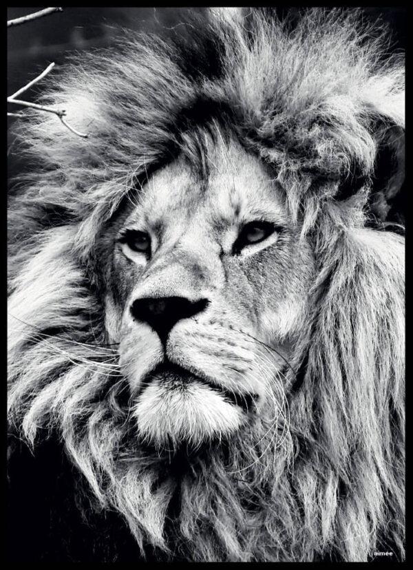 Løven fotoplakat