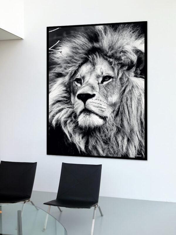 Løven fotoplakat på væg