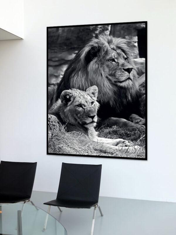 Løveparret fotoplakat på væg