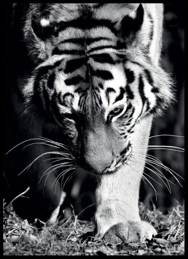 Tigeren fotoplakat