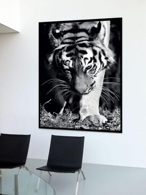Tigeren fotoplakat på væg