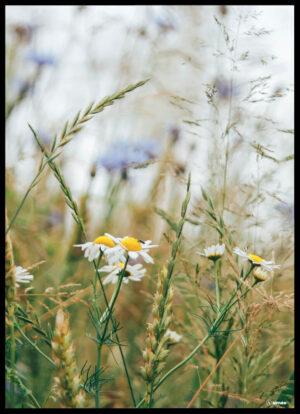 Vildmarken plakat
