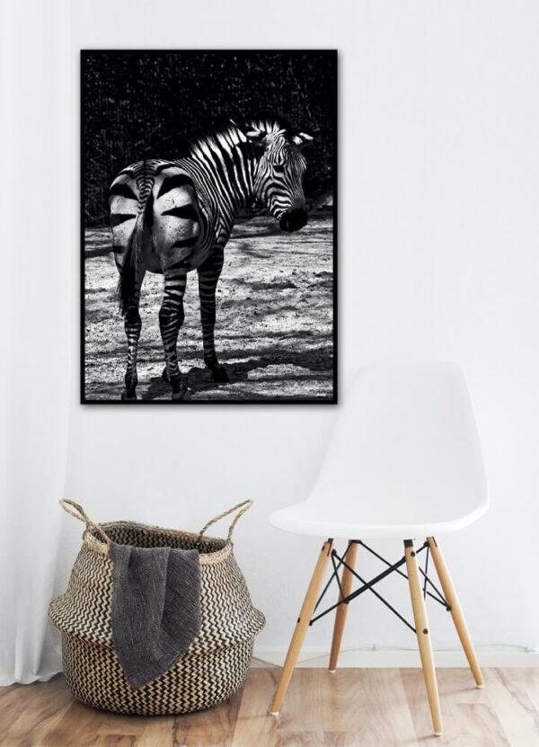 Zebraen fotoplakat på væg