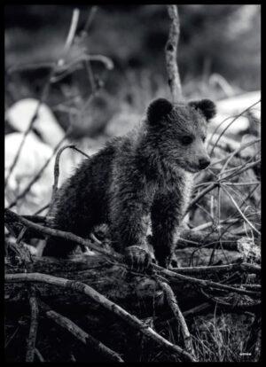 Bjørneungen sort/hvid plakat