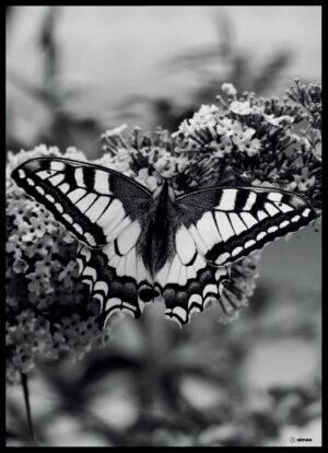 Sommerfuglen sort/hvid plakat