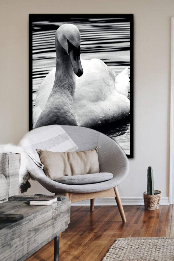 Svanen på søen fotoplakat